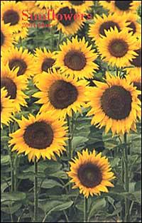 Sunflowers. Agenda settimanale 2004 piccola.