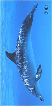 Dolphins. Agenda settimanale 2004 orizzontale