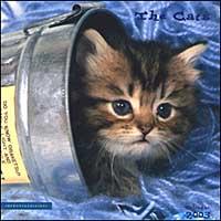 The Cats. Calendario 2003.