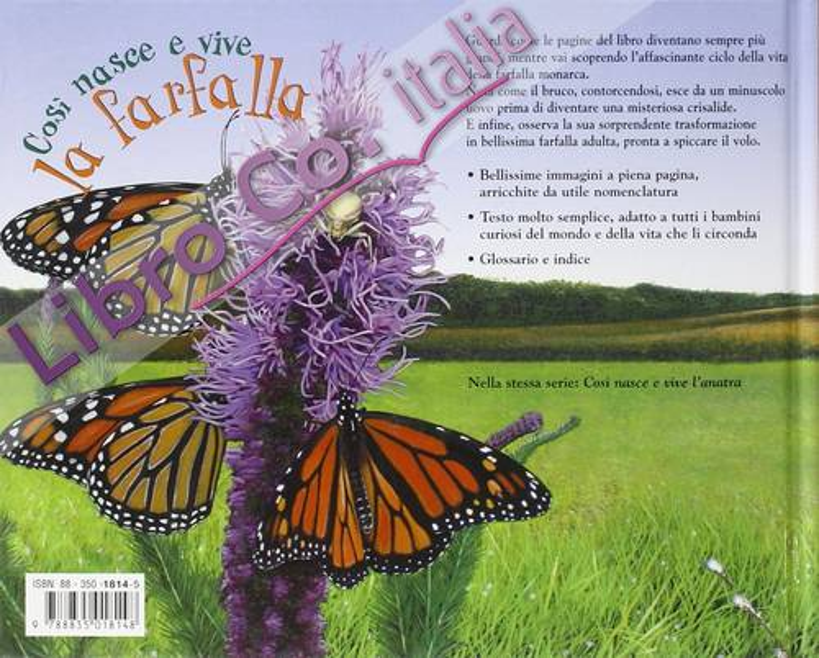 Così nasce e vive la farfalla.