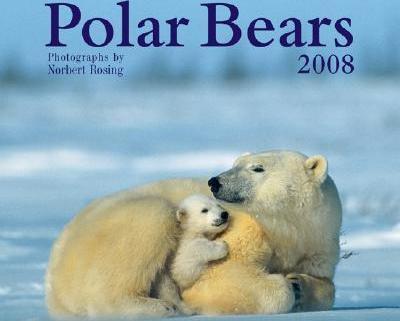 Polar Bears 2008 Calendar