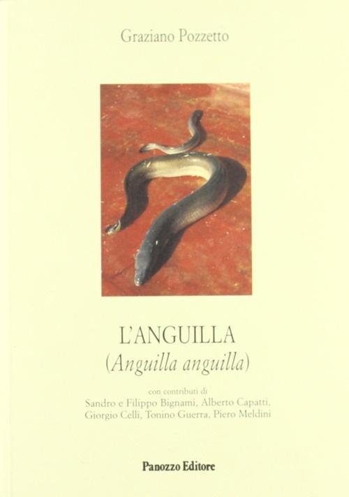 L'anguilla
