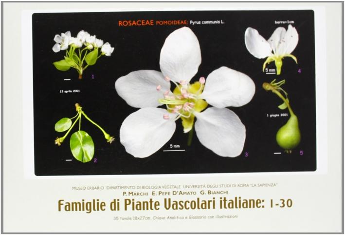Famiglie di piante vascolari italiane: 1-60