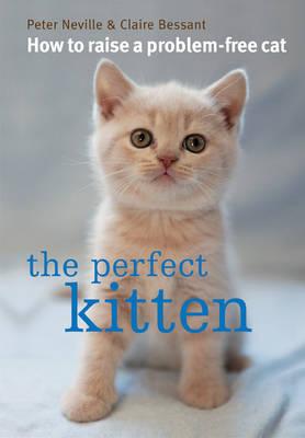 Perfect Kitten.