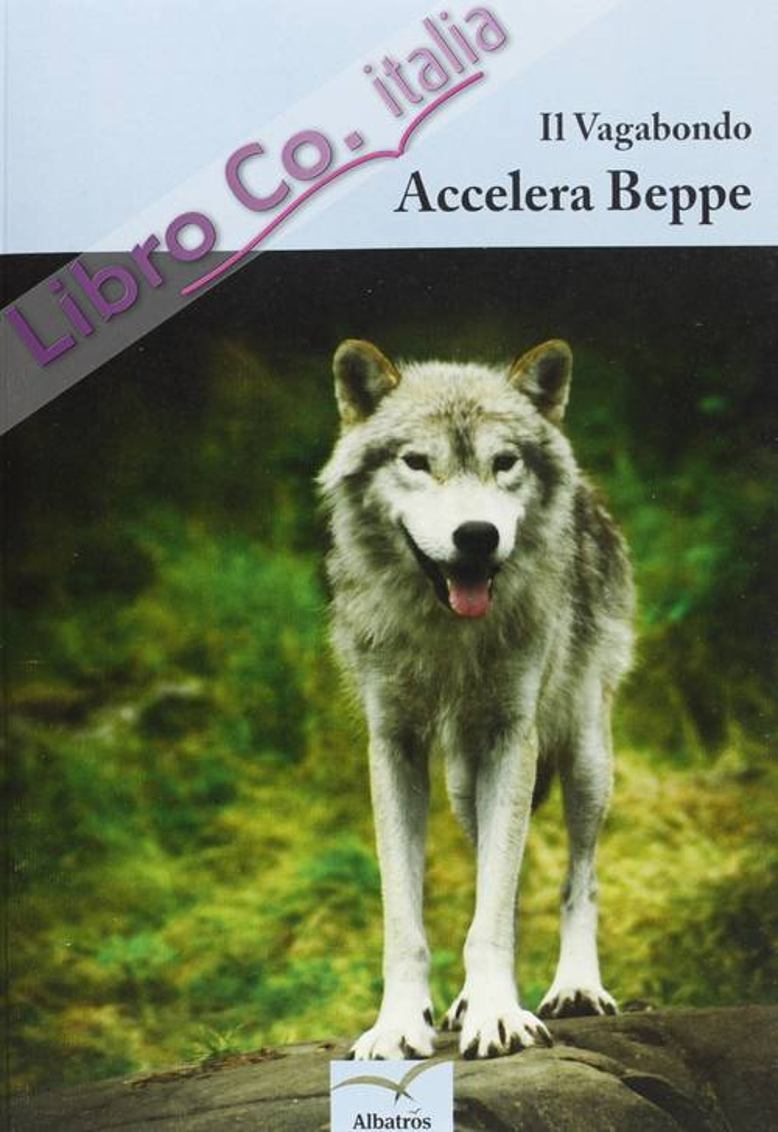 Accelera Beppe