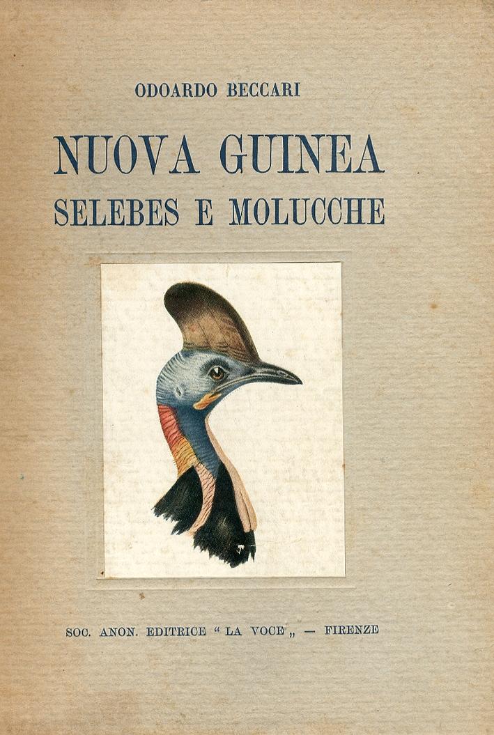 Nuova Guinea Selebes e Molucche