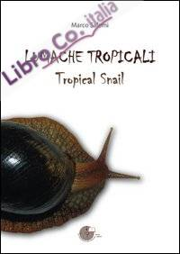 Lumache Tropicali. Tropical Smail
