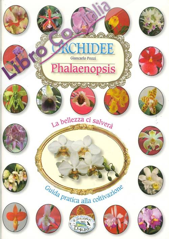Orchidee phalenipsis.
