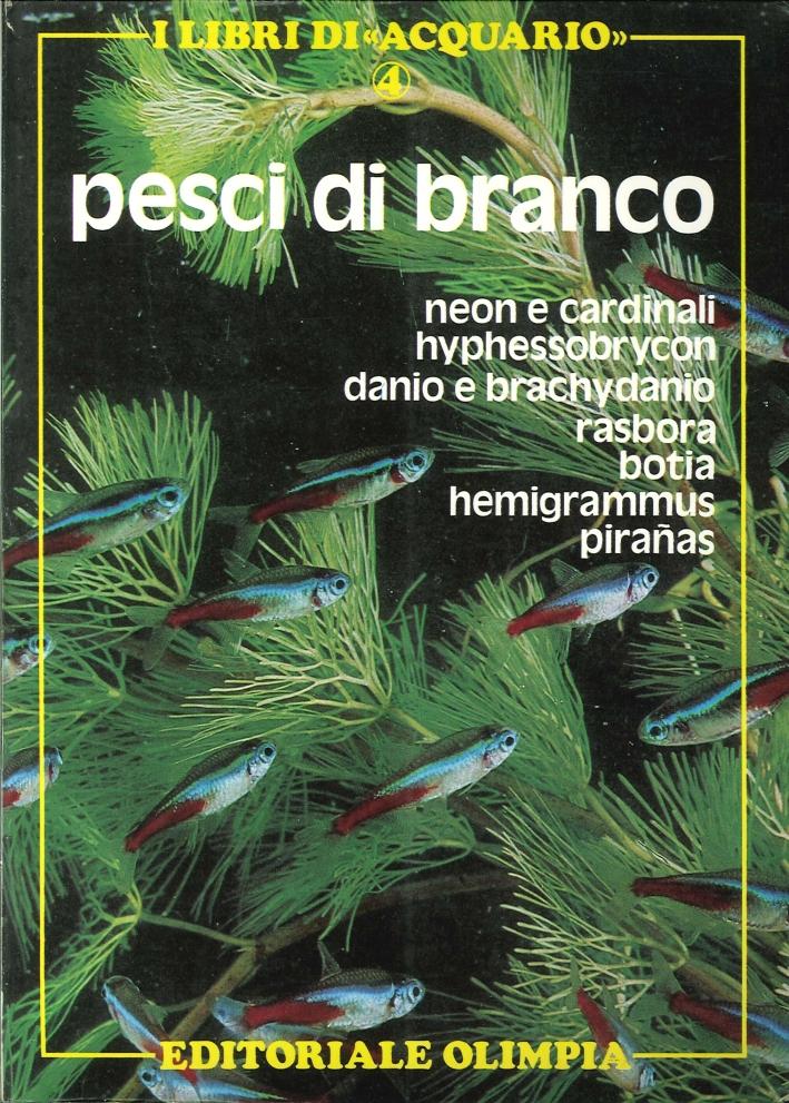 Pesci di Branco. Neon e Cardinali, Hyphessobrycon, Danio e Brachydanio, Rasbora, Botia, Hemigrammus, Piranas.