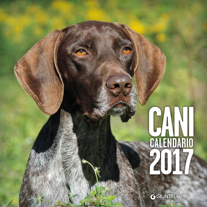 Cani. Calendario 2017.