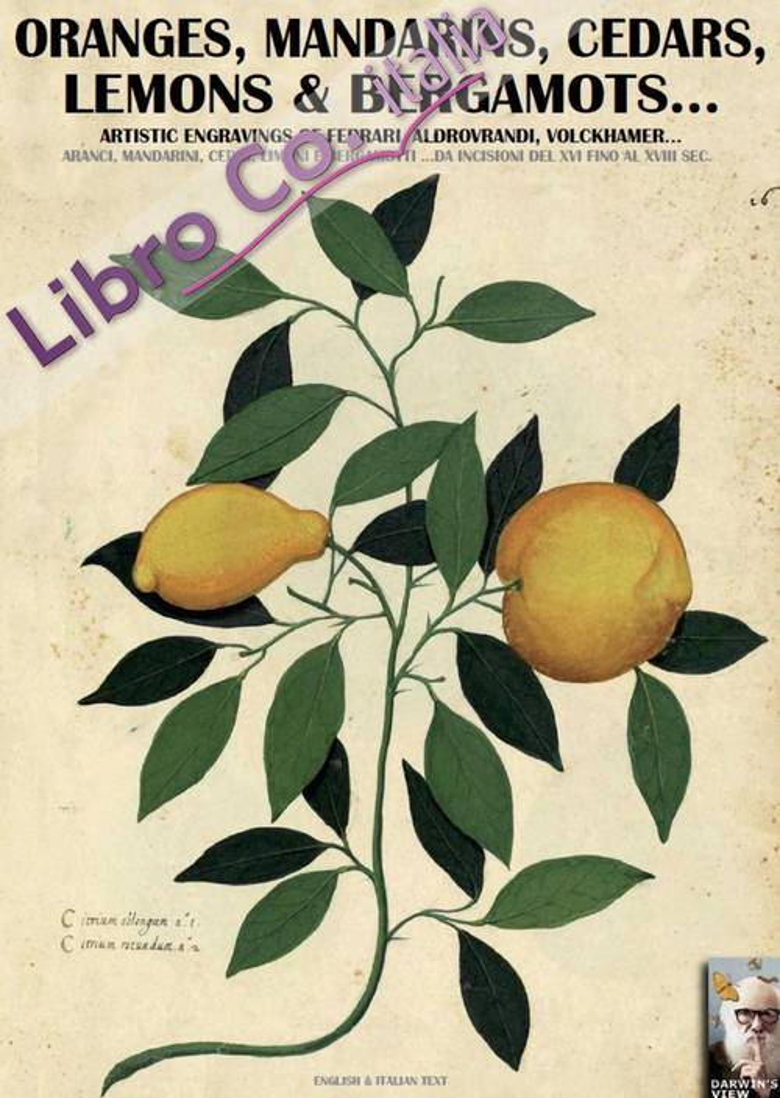 Oranges, mandarins, cedars, lemons & bergamots... Artistic engravings of Ferrari, Aldovrandi, Volckhamer... Testo italiano a fronte.