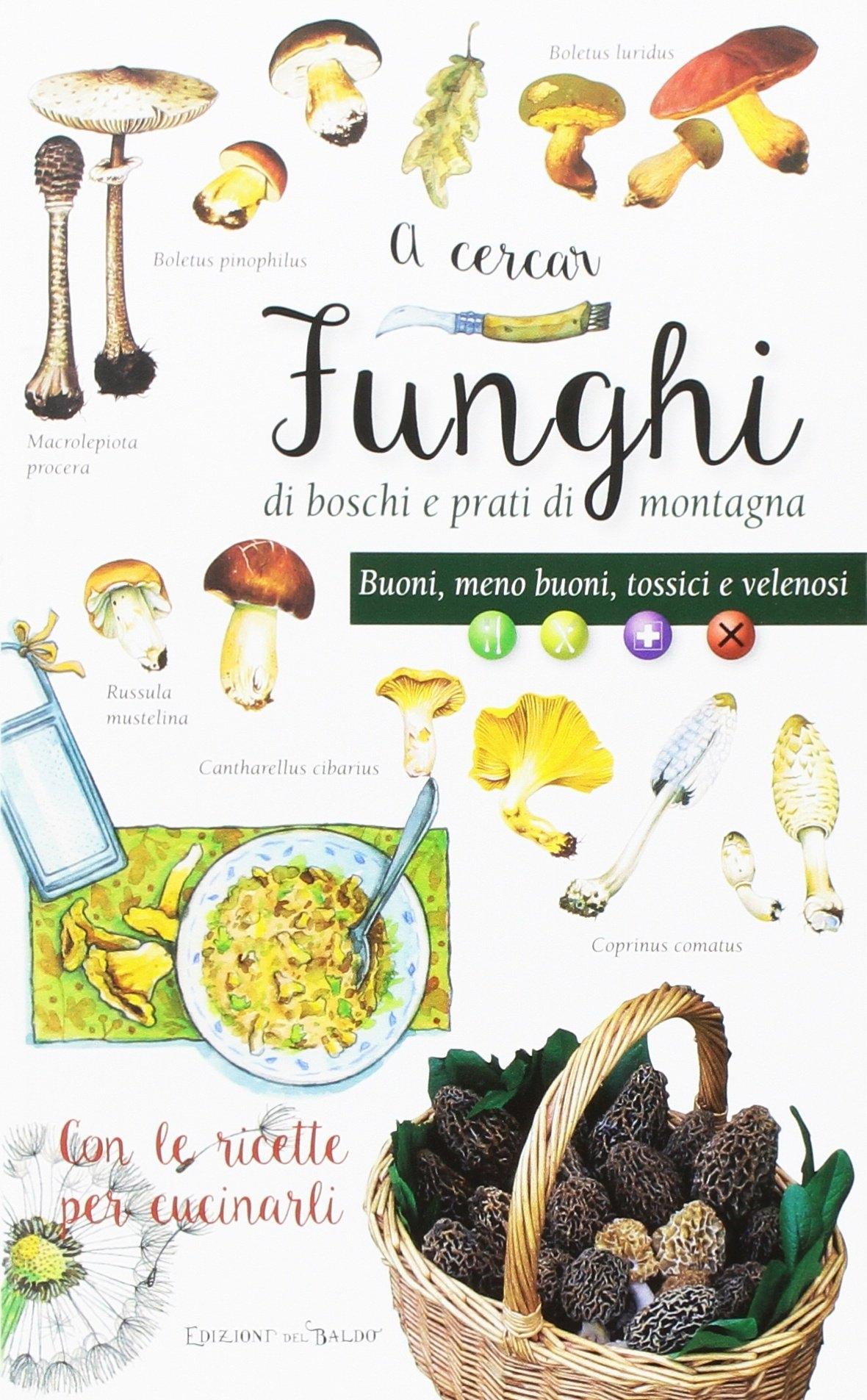 A cercar funghi di boschi e prati di montagna. Buoni, meno buoni, tossici e velenosi. Con le ricette per cucinarli.
