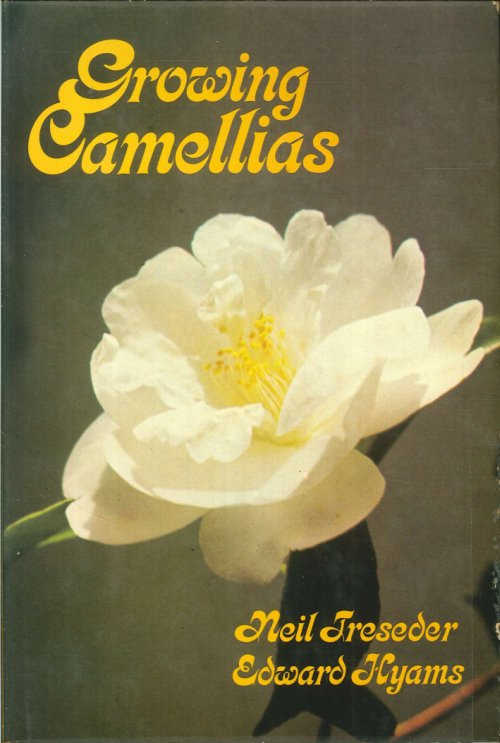 Growing camellias.